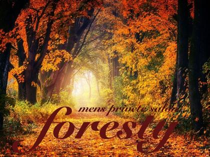 foresty(フォレスティ)